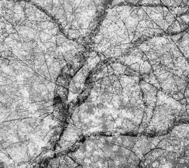 Art in the Cafe